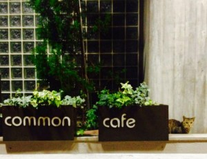 common cafe syasin